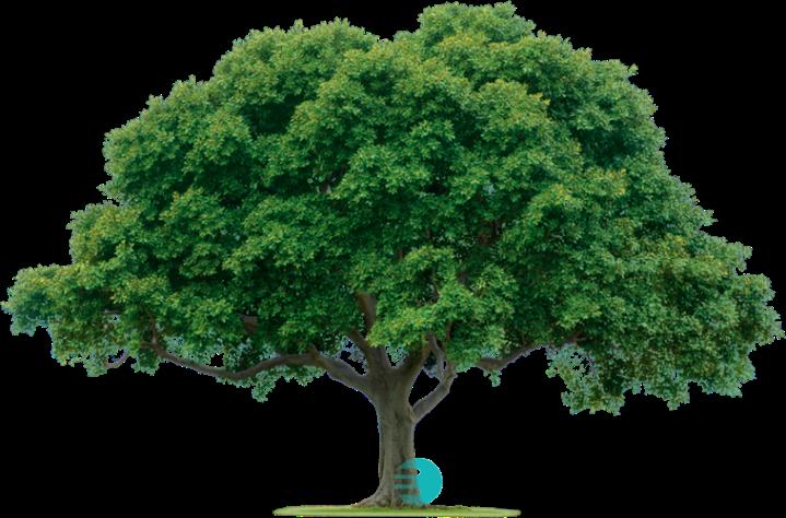 tree758x500